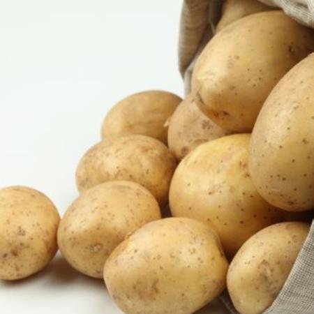semence de pomme de terre agila