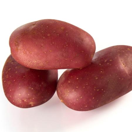 semence de pomme de terre delila