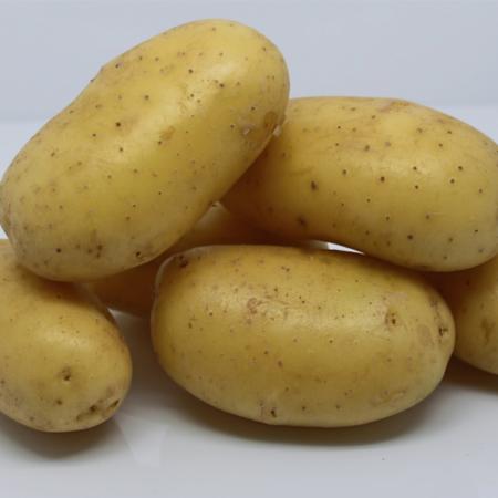 semence pomme de terre ecrin