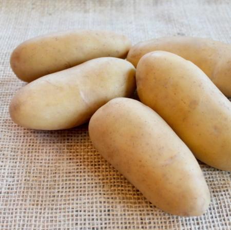 semence de pomme de terre normandeline