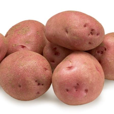 semence de pomme de terre rodolph