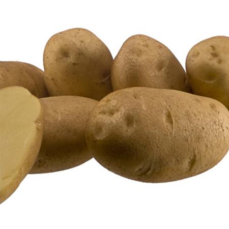 Semence pomme de terre Fontane