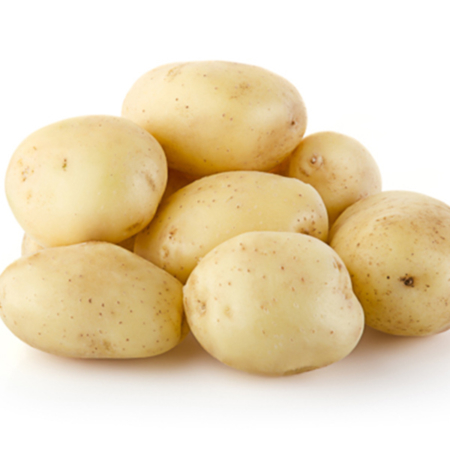 Semence pomme de terre Ondine