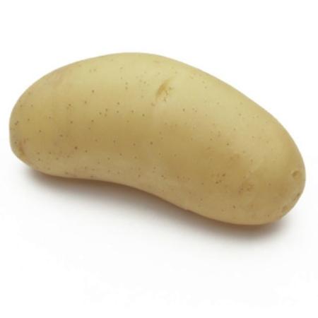 semence de pomme de terre annabelle