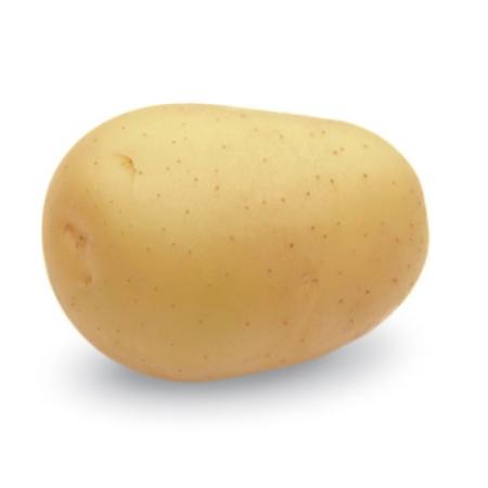 semence de pomme de terre carrera