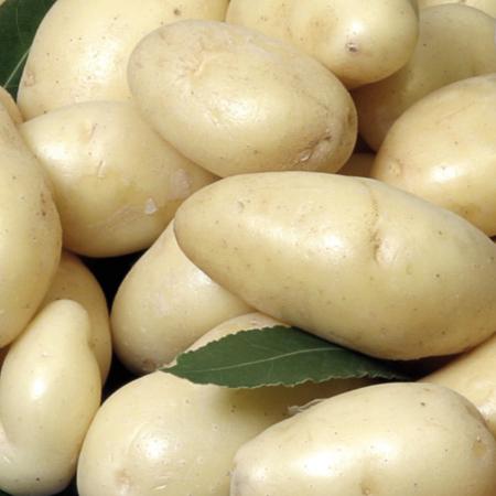 Semence pomme de terre Linzer Delikatess