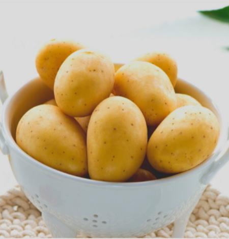 semence de pomme de terre monique