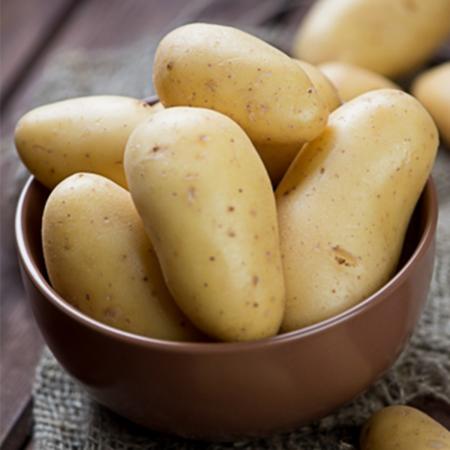 Semence pomme de terre Nicola
