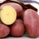 semence de pomme de terre valery