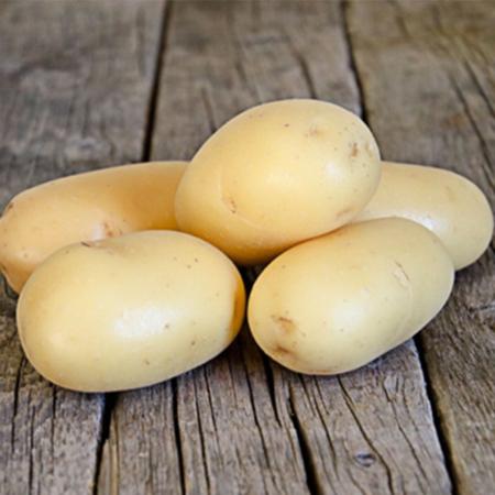Semence pomme de terre Mandola