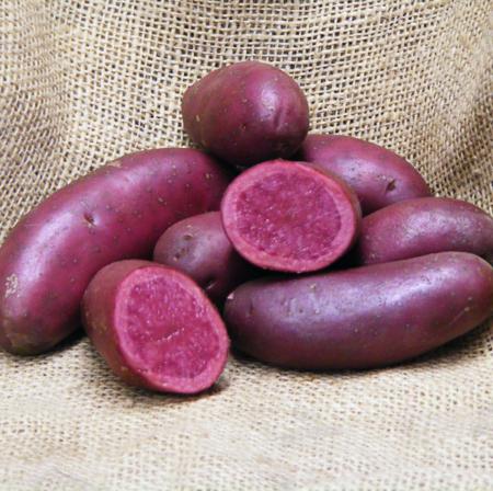 Semence pomme de terre Red emmalie